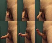 erectie penis